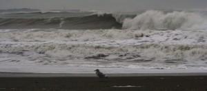 pacific beach washington