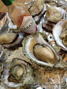 oysters grays harbor