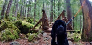 dog hike grays harbor