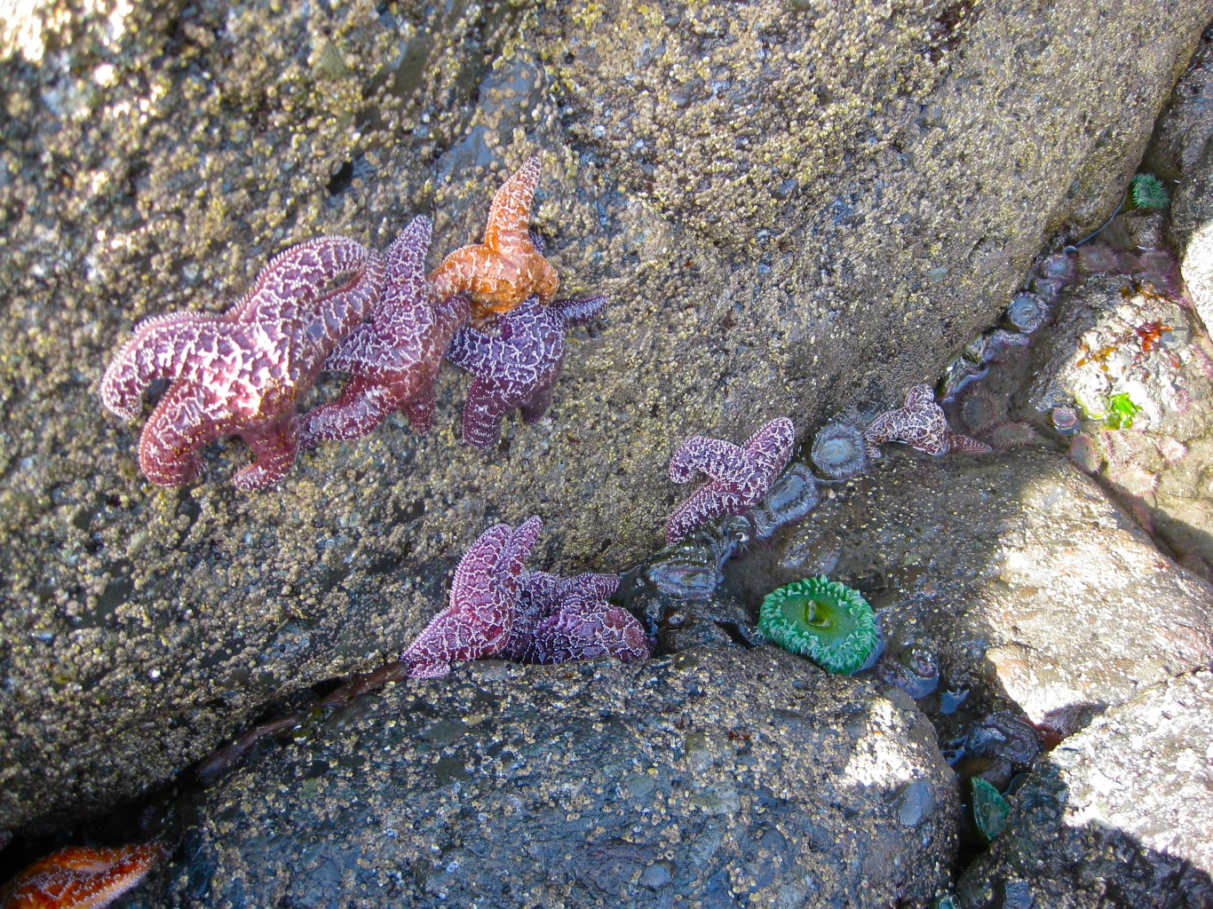 Four impressive tide pool beaches on the olympic peninsula tide pools beach nvjuhfo Choice Image