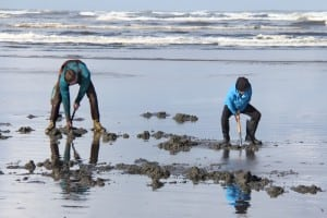 Razor Clam Dig @ Washington Area Beaches