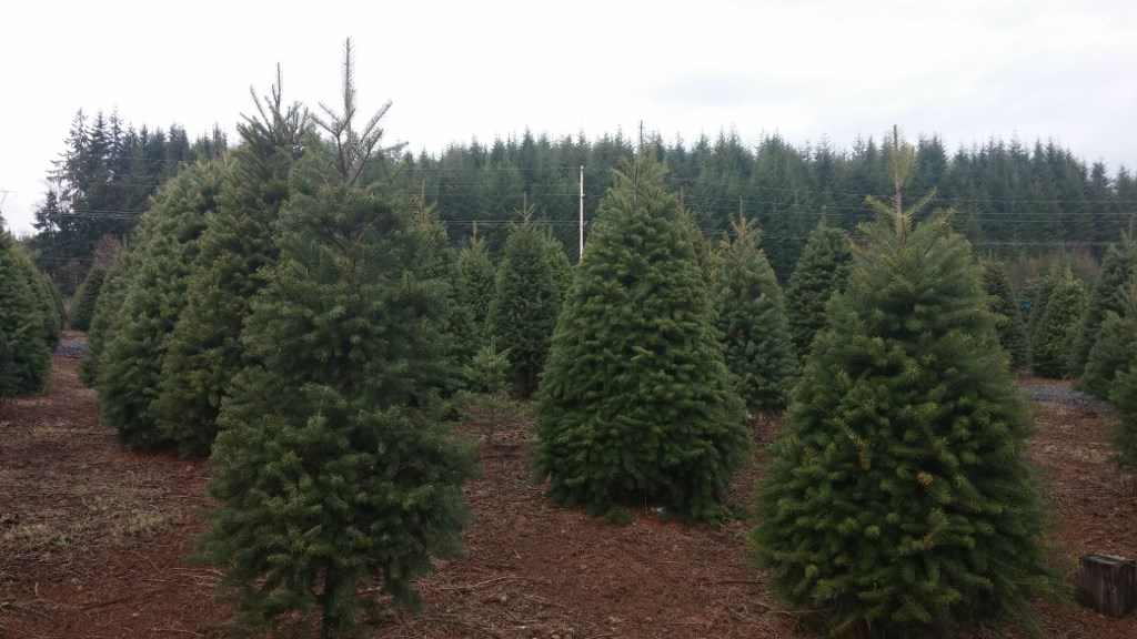 Christmas tree shortage likely means higher prices this holiday