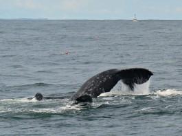 whale watching washington