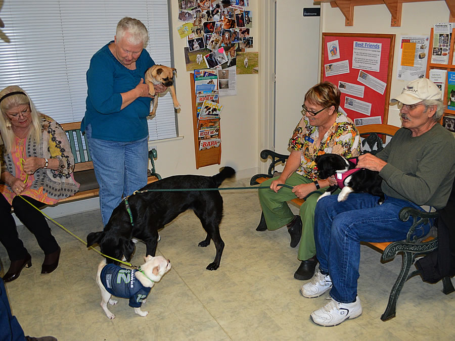 Ocean Shores Animal Hospital Promotes Quality Care At Home And Abroad Graysharbortalk