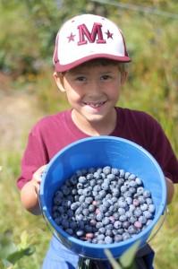 u-pick berries