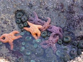 grays harbor tide pools