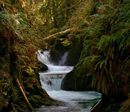 quinault waterfall