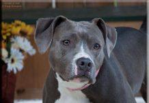 Adopt-A-Pet of Shelton Luna