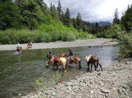 horse trail volunteer