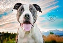 Adopt-A-Pet Dog of the Week