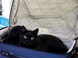 Olympia Pet Emergency