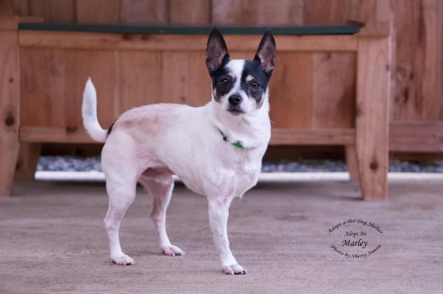 Adopt-A-Pet of Shelton