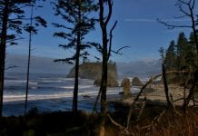 grays harbor hike