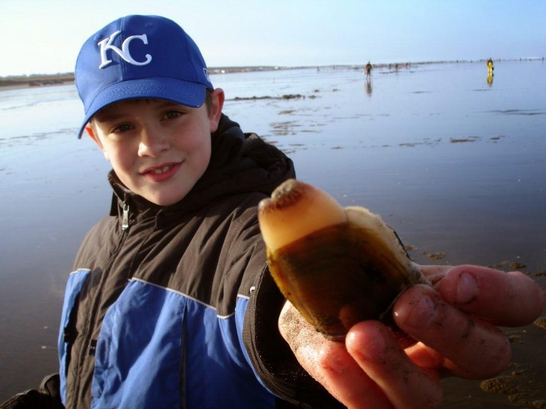 razor clam