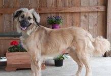 Adopt-A-Pet Shelton