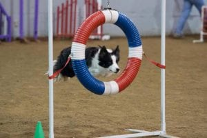 Rainier Dog Agility Trials @ Grays Harbor County Fairgrounds | Elma | Washington | United States