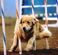 Top Dog Agility Trials @ Grays Harbor County Fairgorunds | Elma | Washington | United States