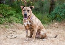 Adopt A Pet Dog of the Week Kiya