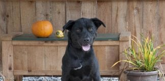 Adopt a Pet Dog of the Week Ty