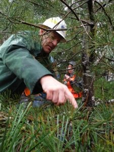 Grays Harbor Forestry degree
