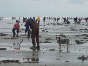 Washington Clam Digging
