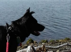 Grays Harbor Dog Friendly Walks