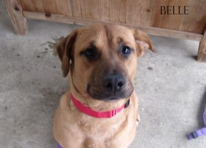 Adopt A Pet Dog of the Week Belle
