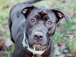 Adopt A Pet Dog of the Week Friday