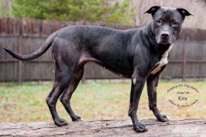 Adopt A Pet Dog of the Week Kira