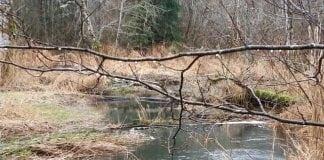 Wildcat Creek Tree Farm Wildcat Creek