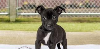 Adopt-A-Pet Dog of the week Dave