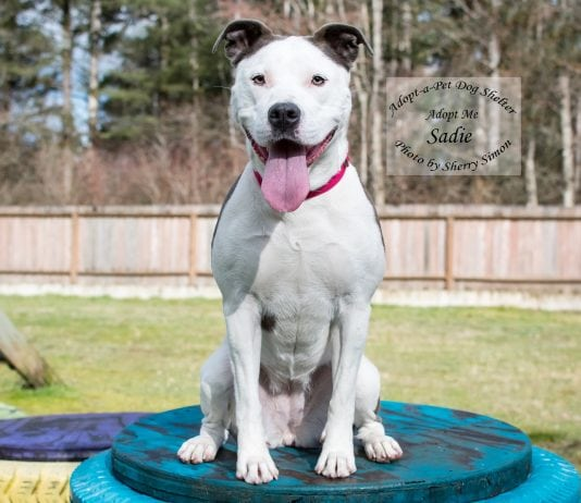 Adopt A Pet Dog of the Week Sadie