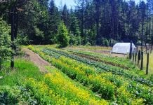 Grays Harbor CSAs Sky Island Field