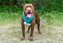 Adopt a Pet Dog of the Week Rusty