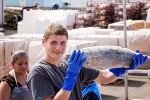 Westport Marina Albacore Loading blast frozen fish at Westport Seafood, Inc