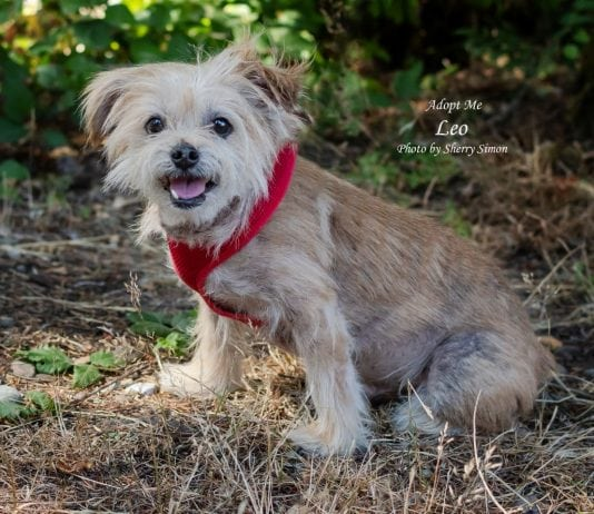 Adopt a Pet Dog of the Week Leo
