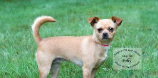 Polly dog of the week Adopt-A-Pet