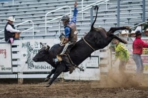 Grays Harbor clash of the cowboys cowboy on bull