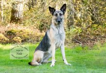 Adopt A Pet Dog of the Week Nala