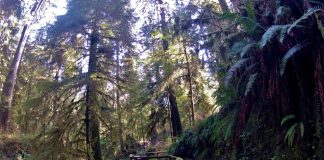 Quinault Rainforest Trail