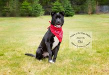 Adopt-A-Pet Dog of the Week Taz