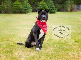 Adopt-A-Pet Dog of the Week Taz