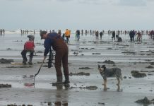 Razor Clam Digging Washington Coast