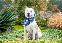 Adopt a Pet Dex Dog of the Week