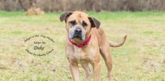 Adopt A Pet Dog of the Week Duke