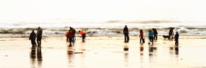 Quinault Beach Resort Casino clam diggers on beach 3