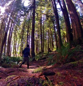 Grays Harbor Hiking