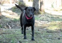 Adopt A Pet Dog of the Week Bella Luna