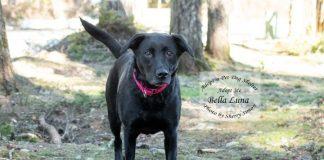 Adopt A Pet Dog of the Week Bella Luna