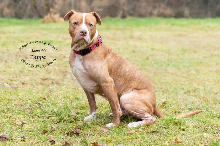 Adopt A Pet dog of the week Zappa